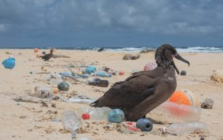 Photograph of a seabird surrounded by plastic