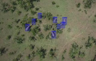 Caption of realtime identification of elephants from drone imagery