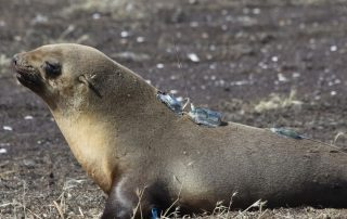Seal with accelerometers attached to its back