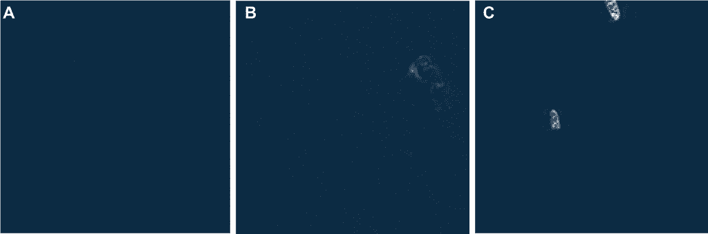 Examples of satellite imagery including open water, southern right whales, and whale-watching boats.